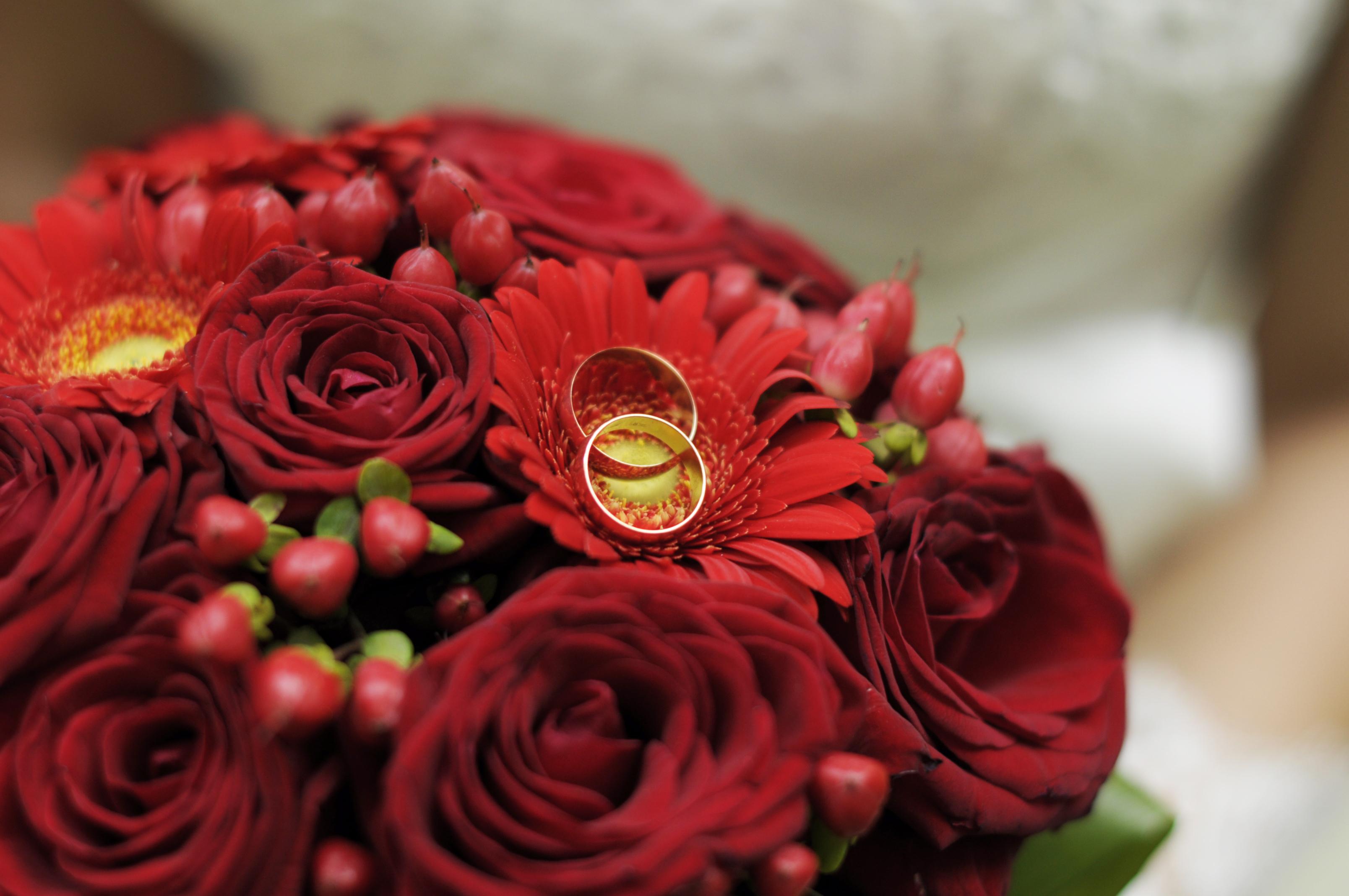 сессия в красном цвете