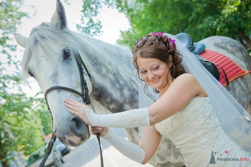 Фото 58298 в коллекции Свадьба - Наталья и Сергей