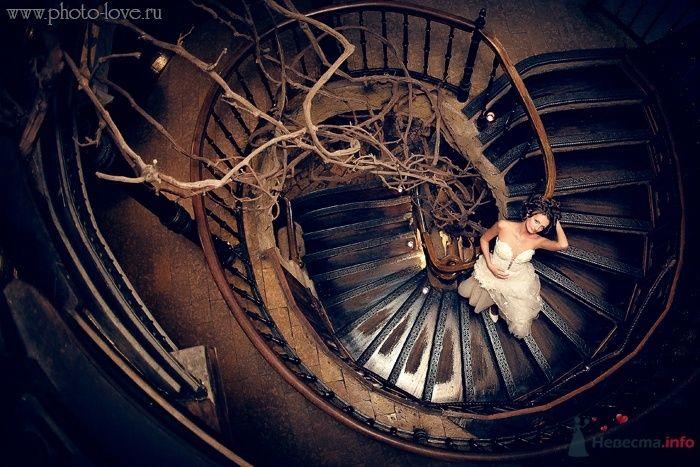Фото 54010 в коллекции Свадебные фото - Фотограф Сергей Беликов