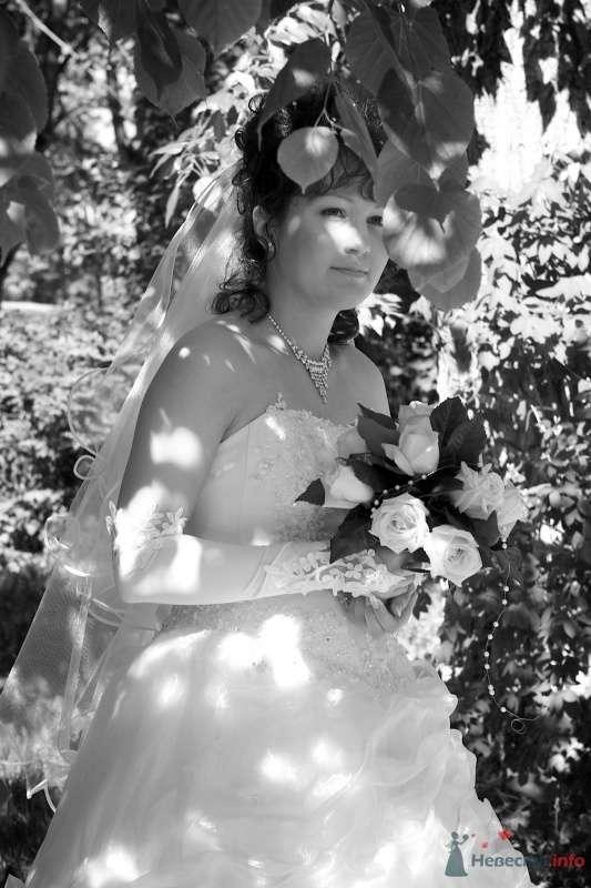"""Свадьба Димы и Светы - фото 66022 Студия """"MAGIQUE"""""""
