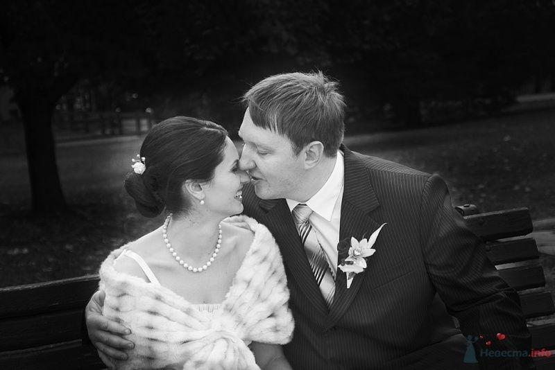 Свадьба - фото 65859 Фотограф Леонид Шафтан