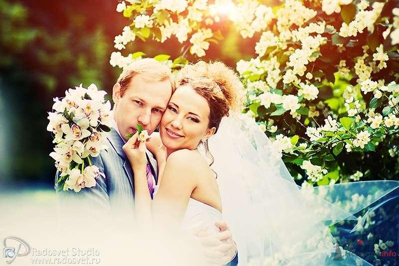 Фото 41041 в коллекции Свадебное фото - Фотограф Радосвет Лапин