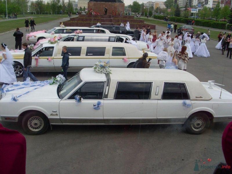 Фото 68990 в коллекции Свадебный Flashmob 1.