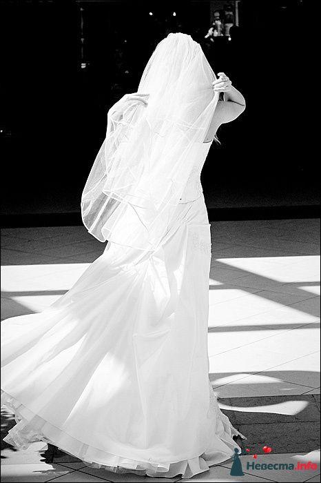 Фото 107794 в коллекции Первая выставка Свадебной фотографии в Перми - Фотограф Швецов Николай