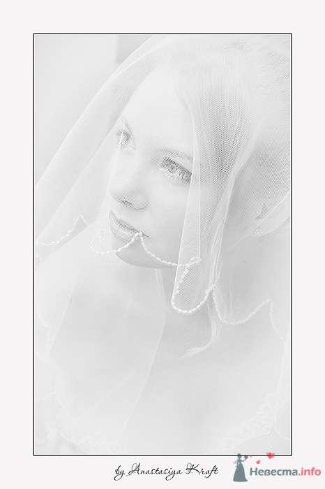 Фото 78005 в коллекции Wedding 2009 - Фотограф Анастасия Крафт