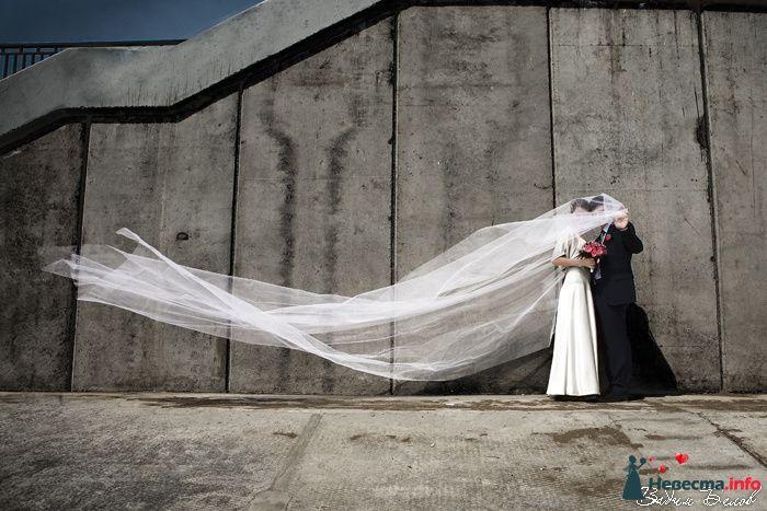 Фото 103628 в коллекции Свадьбы (Фотограф Вадим Белов) - Невеста01