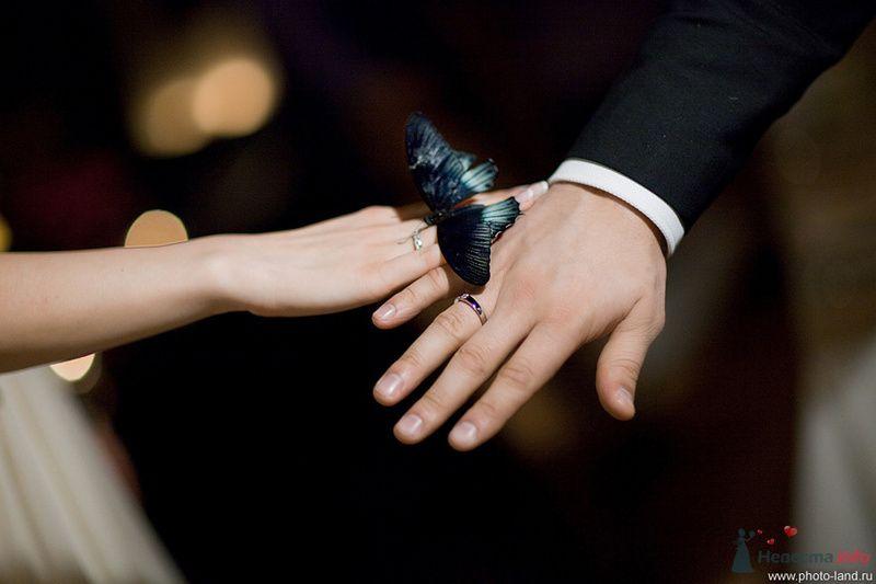 Свадебный фотограф Андрей Егоров - фото 78093 Свадебные фотоистории от Андрея Егорова