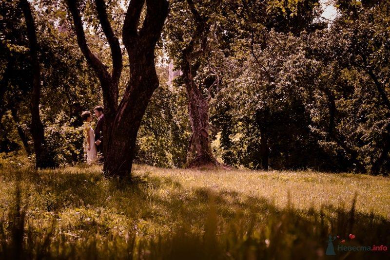 Фото 69845 в коллекции Свадебные фотографии - Свадебный фотограф Сергей Несин