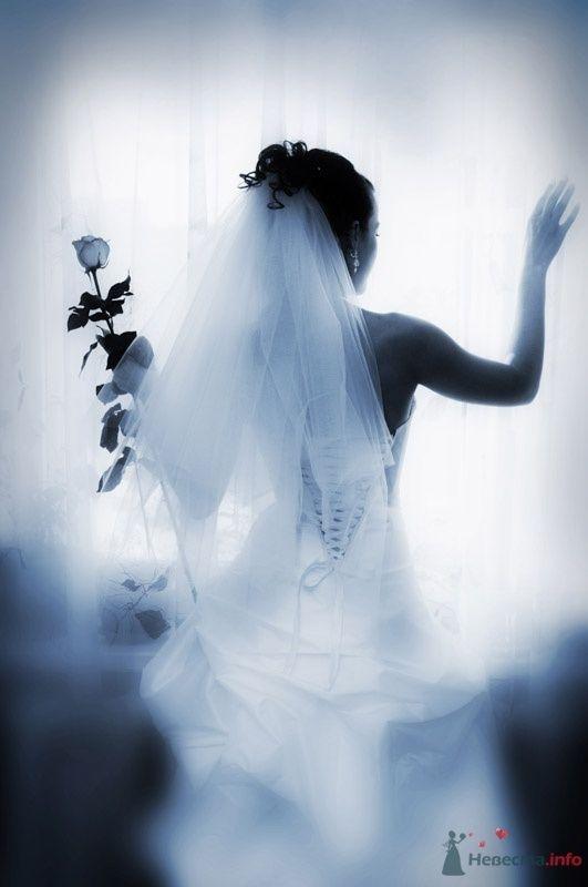 Фото 70441 в коллекции Свадебный фотограф г.Липецк - Невеста01