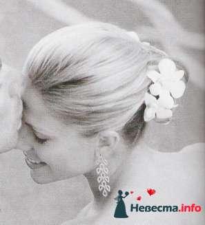 Фото 82232 в коллекции Мои фотографии - Невеста01