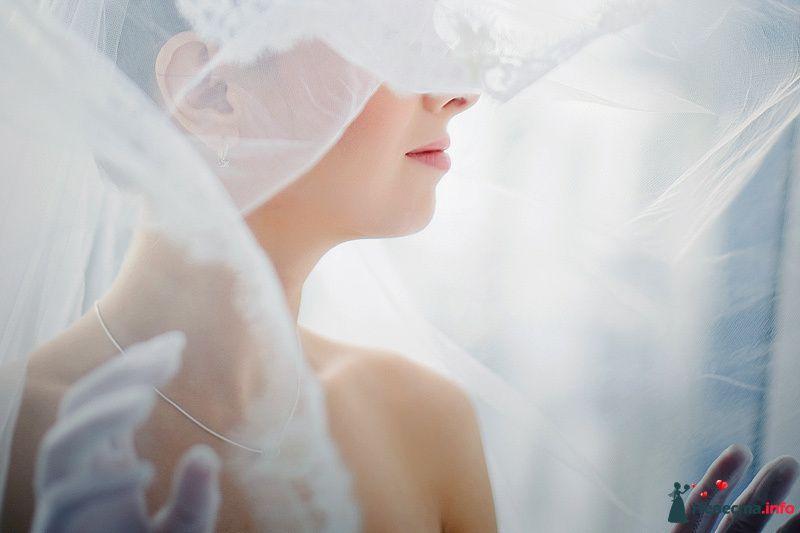 Фото 86802 в коллекции Борис и Тоня - Свадебный фотограф. Татьяна Гаранина