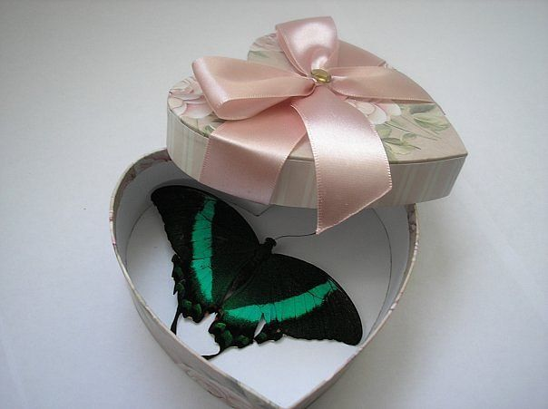 Бабочки в коробке подарок цена волгоград