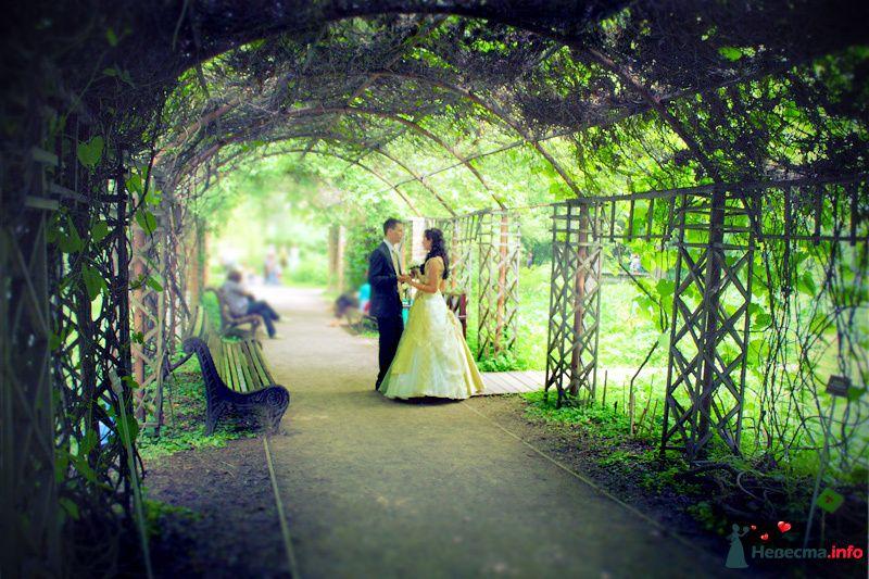 Фото 108837 в коллекции Свадебная фотография