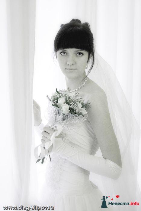 Фото 80821 в коллекции Свадьба Белгород - immortal