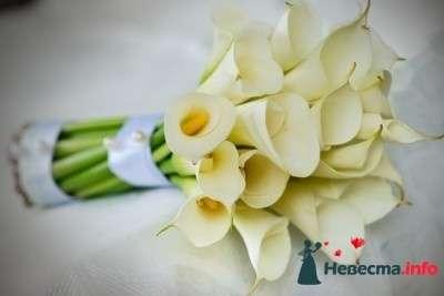 Фото 84848 в коллекции Букет Невесты - Свадебный распорядитель. Яна