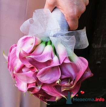 Фото 89804 в коллекции Букет Невесты - Свадебный распорядитель. Яна