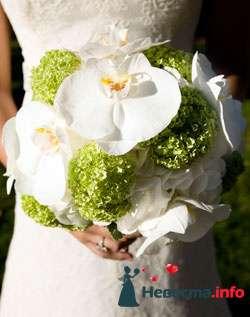 Фото 96657 в коллекции Букет Невесты - Свадебный распорядитель. Яна