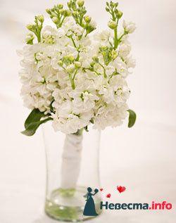 Фото 96679 в коллекции Букет Невесты - Свадебный распорядитель. Яна