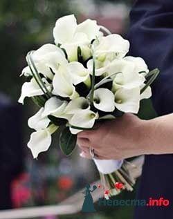 Фото 96715 в коллекции Букет Невесты - Свадебный распорядитель. Яна