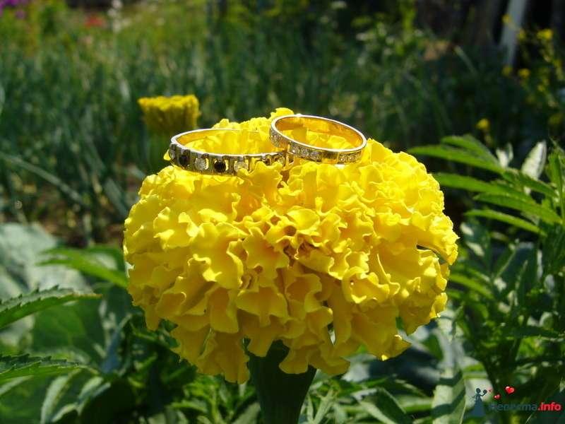 Наши кольца - фото 126318 БелИрина