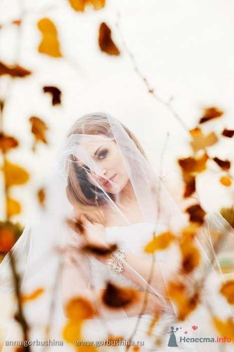 Фото 54919 в коллекции Ирина и Андрей. 2/10/2009 - Анна Горбушина - фотоагентство SunStudio