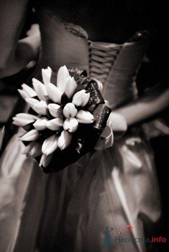 Фото 17430 в коллекции Свадебные фото и репортаж - Фотограф Руслан Сафин