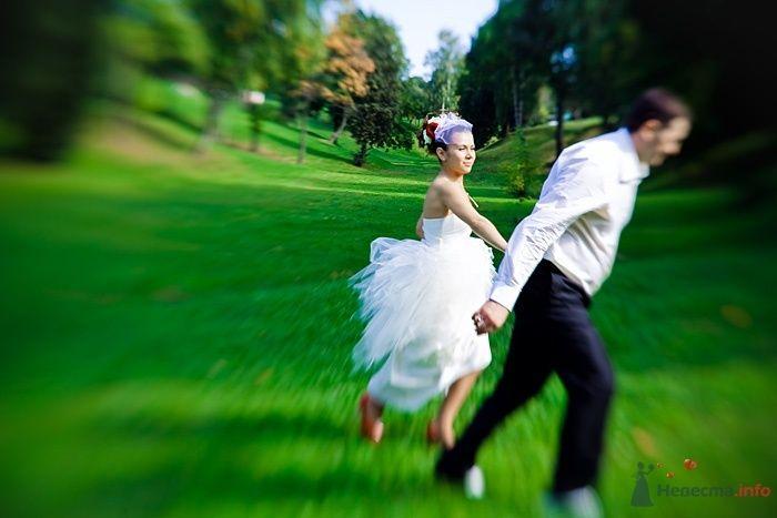 Жених и невеста, взявшись за руки, идут по зеленой лужайке - фото 39488 Фотограф Елена Зотова