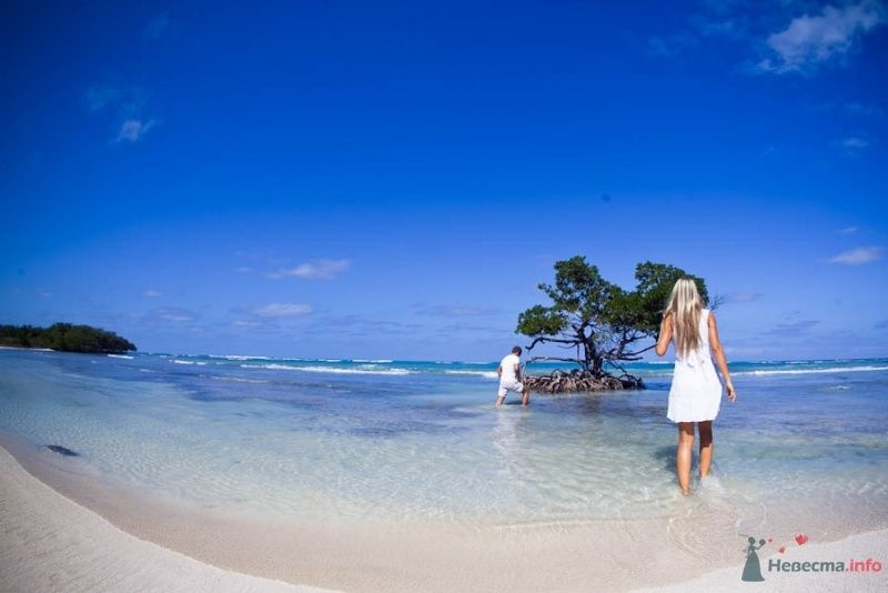 Мангровые острова - фото 66642 Фотограф Елена Зотова
