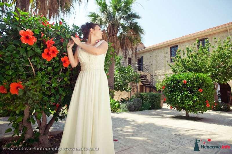 Фото 111577 в коллекции Кипр. Свадьба Кати и Сережи - Фотограф Елена Зотова