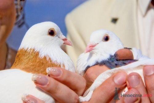 Свадебные голуби - фото 13339 Art union profi - агентство свадебных торжеств