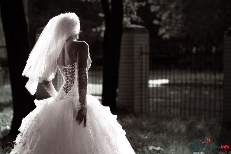 Фото 91905 в коллекции Мои фотографии - Свадебный фотограф Роман Пламеневский