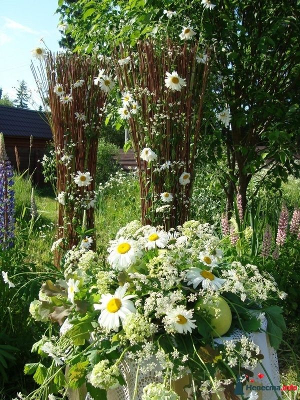 ромашковая свадьба - фото 107372 Флорист-декоратор Янина Венгерова