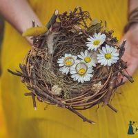 Гнездо с ромашками и обручальными кольцами