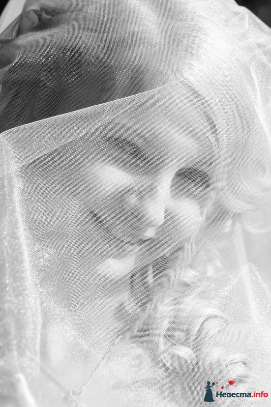 """Фото 99874 в коллекции Свадебные истории: Андрей и Александра - Студия """"ЛАДОС"""""""