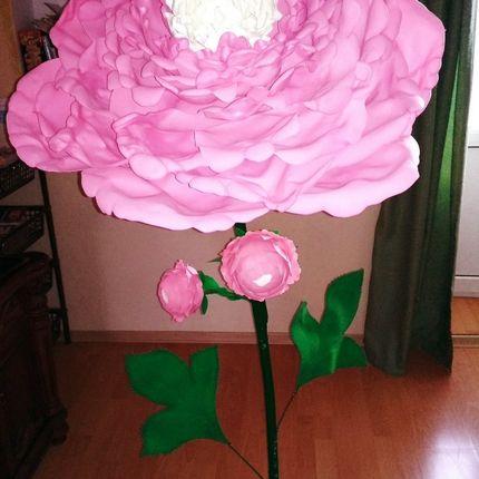 Ростовой цветок Пион