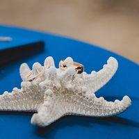 Подушечка для колец. Морская свадьба Маши и Димы. Фотограф Инна Семенова