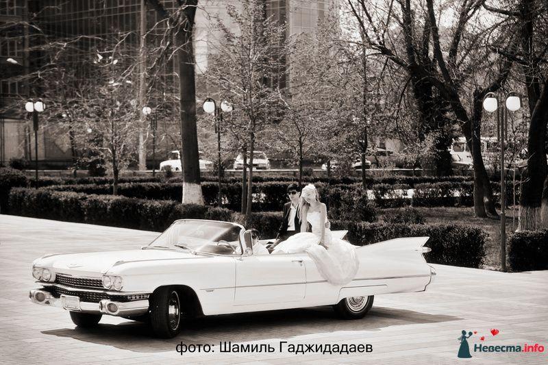 """Фото 97875 в коллекции Свадебное фото - Компания """"КАРАВАН-СЕРВИС"""""""