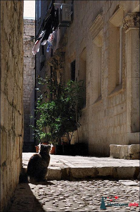 Фото 112164 в коллекции Хорватия - Фотограф Наталья Черкасова