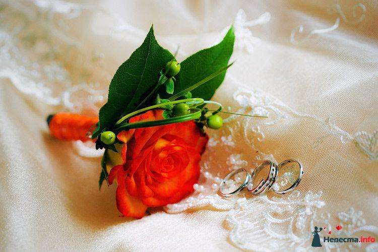 Золотые кольца с бороздками на фоне красной розы. - фото 81722 e.shamp