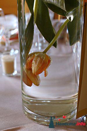 Фото 81727 в коллекции Оранжевый - e.shamp