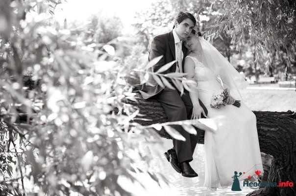 Фото 105348 в коллекции Свадебные фото - Фотограф Alexandr Osipov