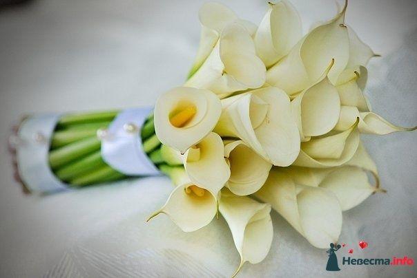 Букет невесты из белых калл, декорированный светло-голубой лентой и - фото 120034 1542704