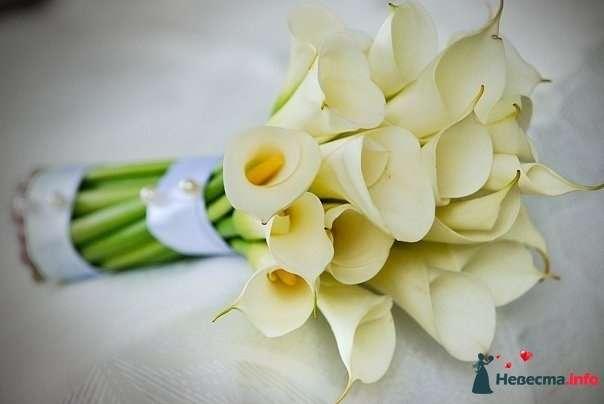 Букет невесты из белых калл, декорированный светло-голубой лентой и белыми жемчужными бусинами  - фото 120034 1542704