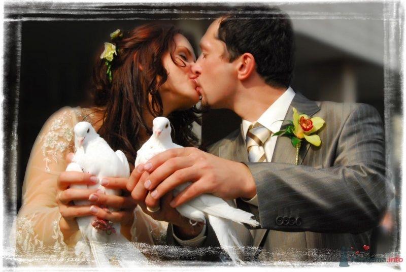 Любовь и голуби - фото 58564 Murka-Alla