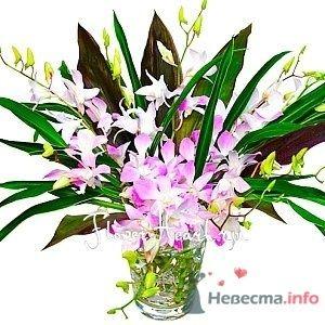 орхидеи - фото 49352 Missy