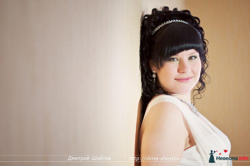 Фото 119671 в коллекции фотограф Дмитрий Шойтов - Дмитрий Шойтов
