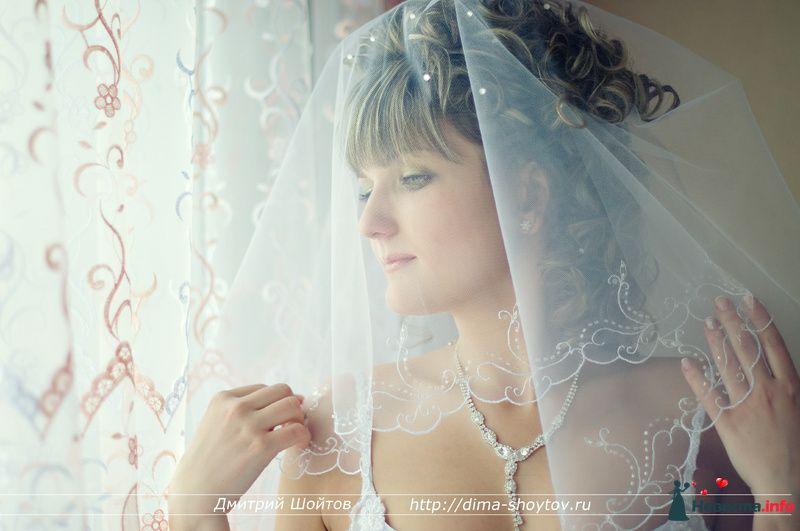 Фото 119684 в коллекции фотограф Дмитрий Шойтов