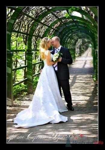 Фото 12204 в коллекции Мои фотографии - Сергей Фролов - свадебный фотограф
