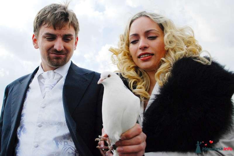 Фото 125552 в коллекции Свадьба Кирилл и Елена - Студия свадебной фото и видео съемки ''Кадр36''