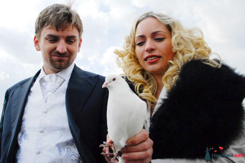 Фото 125552 в коллекции Свадьба Кирилл и Елена